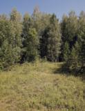 лес,_парк,_деревь
